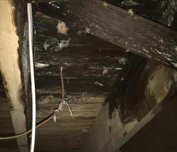 Water Damage Long term water damage causes little puddle on kitchen floor but big problems in crawlspace